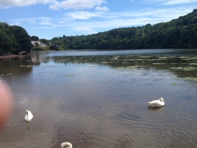 Joining the swans on the River Dart